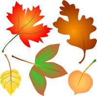 fall-leaves-200
